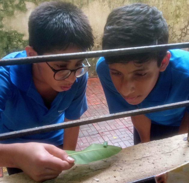 Aryaswa &Jash with a caterpillar